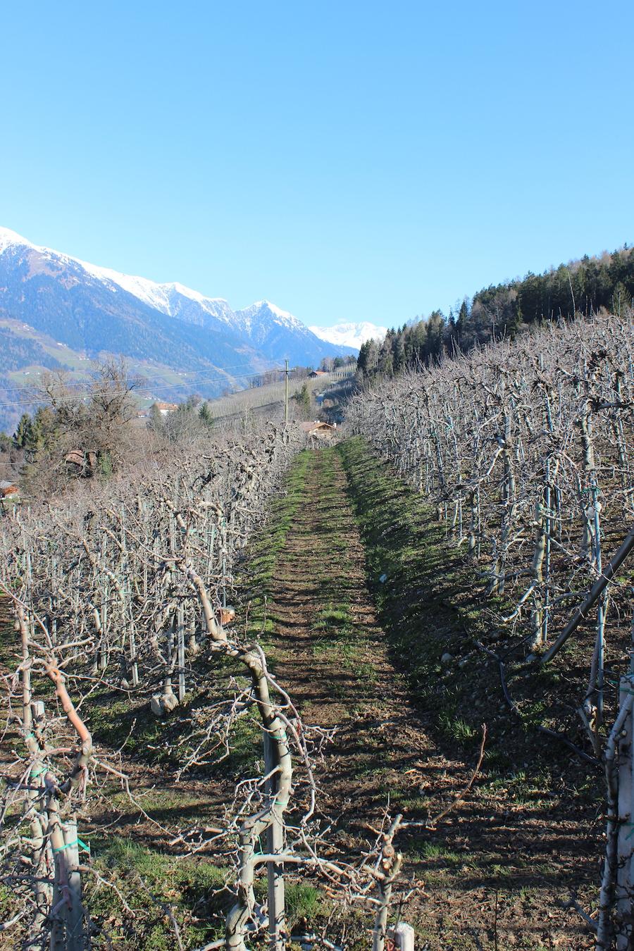 Apfeloase Schenna Südtirol 10