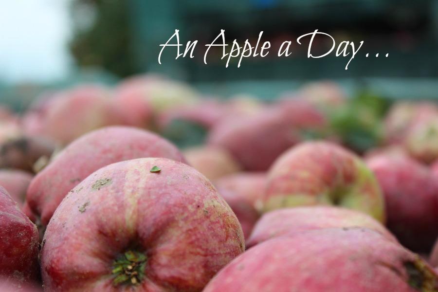 An Apple a Day - Apfelernte in Südtirol