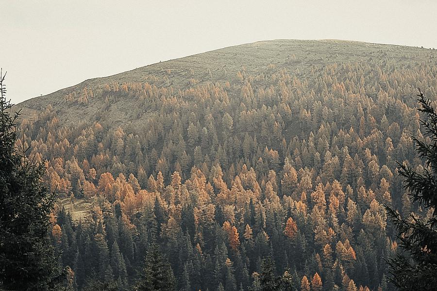 A Tasty Hike - Wanderung Missensteiner Joch - Meran 2000 - Herbst