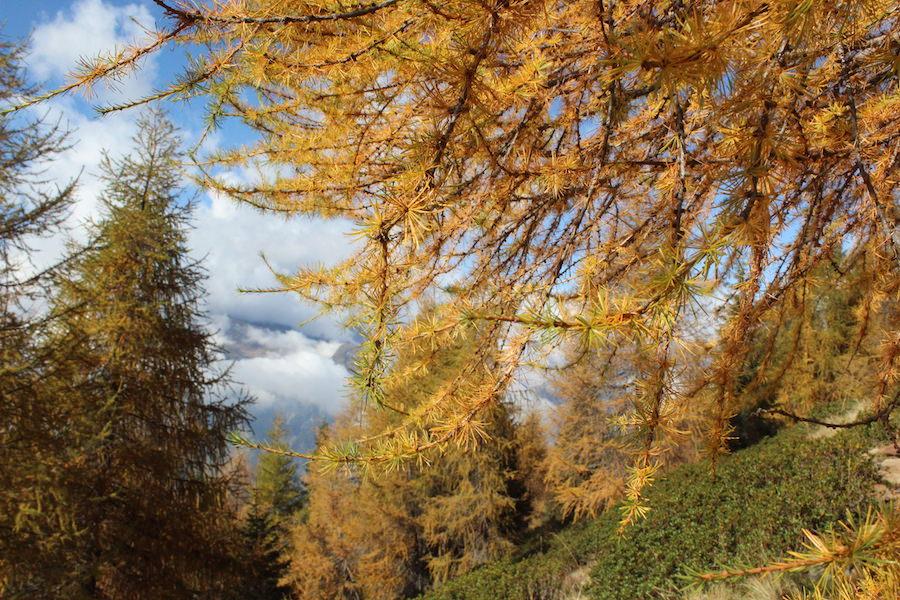 Wandern - Hirzer - Südtirol 10