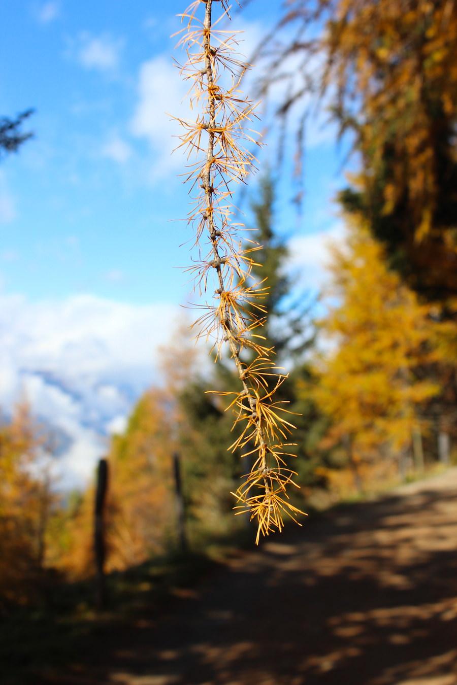 Wandern - Hirzer - Südtirol 11