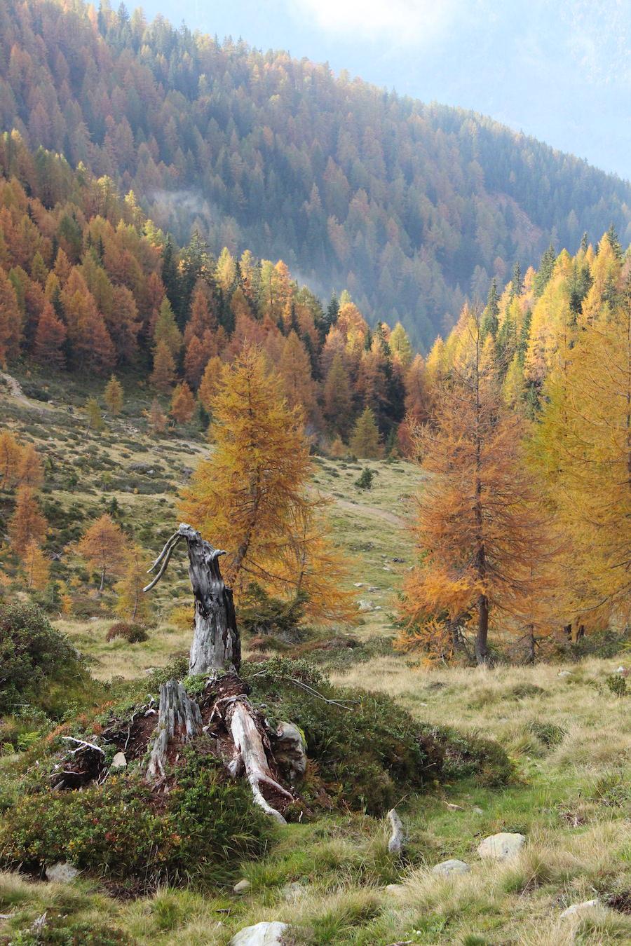 Wandern - Hirzer - Südtirol 31