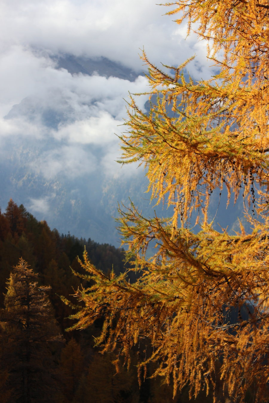 Wandern - Hirzer - Südtirol 32
