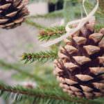Weihnachtszeit im Allgäu – Mit diesen Köstlichkeiten Verwöhnt der Kronburger Weihnachtsmarkt
