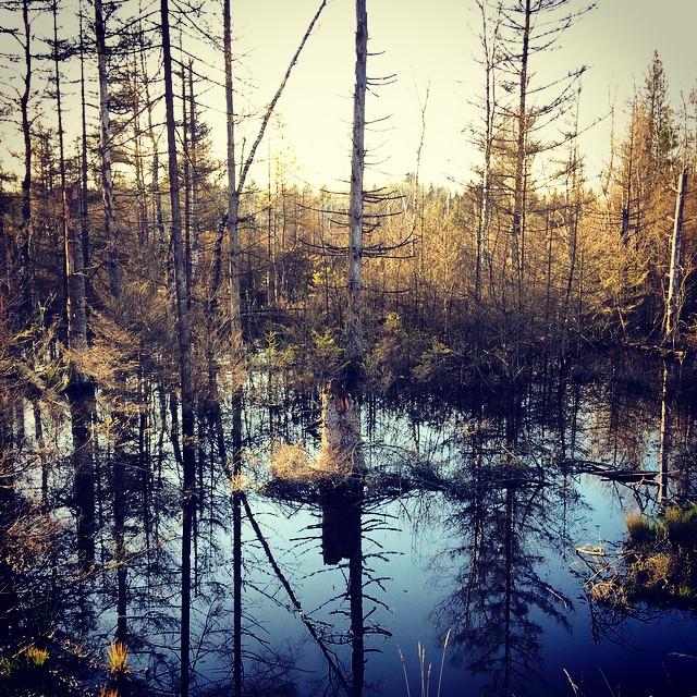 14 Allgäu - Wandern am Moorlehrpfad Arrisrieder Moos