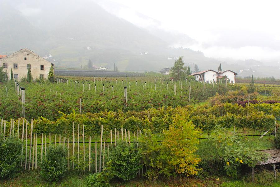 A Tasty Hike - Kränzlehof Südtirol 16