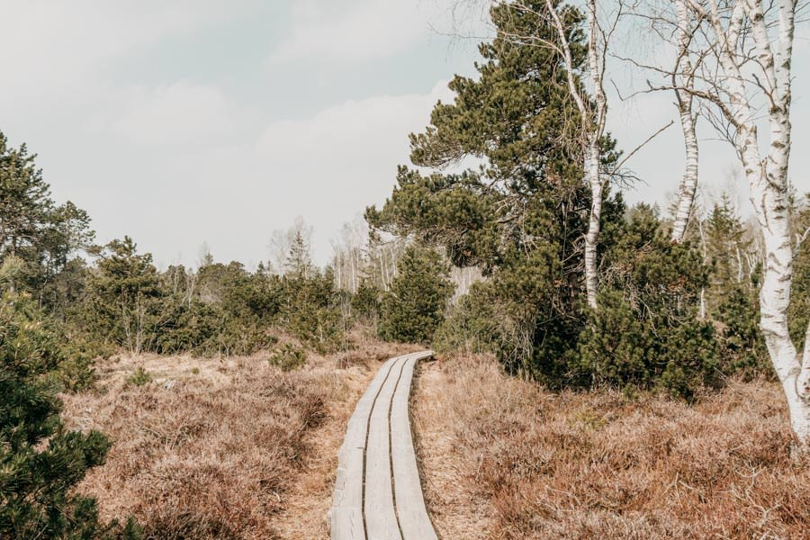 Spaziergang Arrisrieder Moos bei Kisslegg im Allgaeu 14