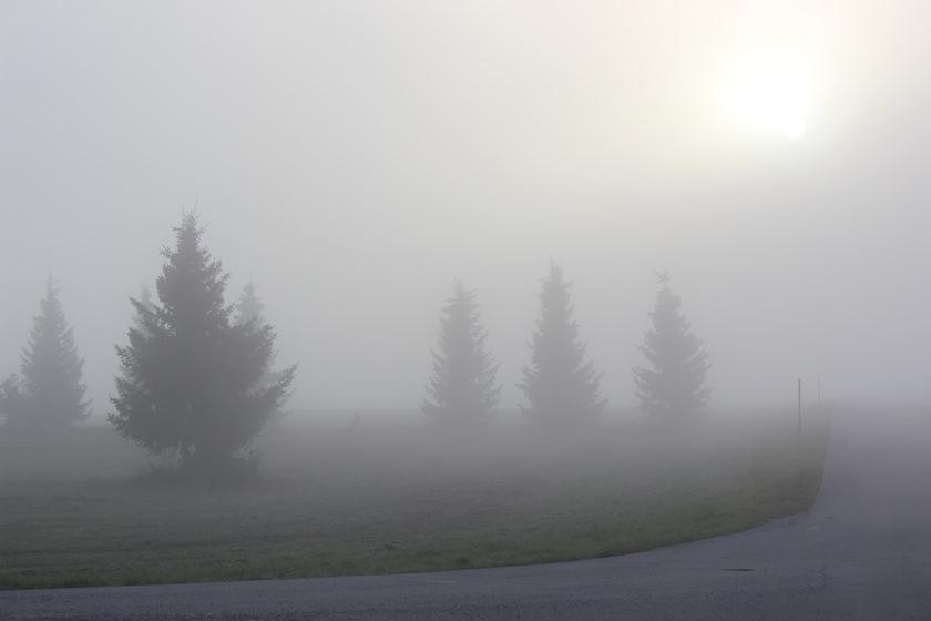 Wandern im Arrisrieder Moos Kisslegg Allgäu