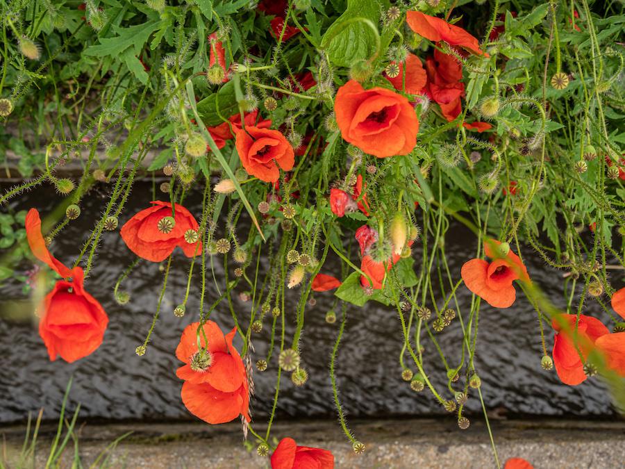 Waalweg Suedtirol - Was ist ein Waalweg - A Tasty Hike Blumen