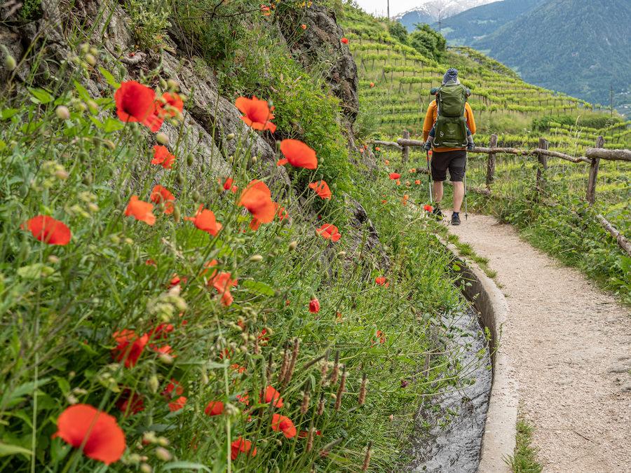 Waalweg Suedtirol - Was ist ein Waalweg - A Tasty Hike
