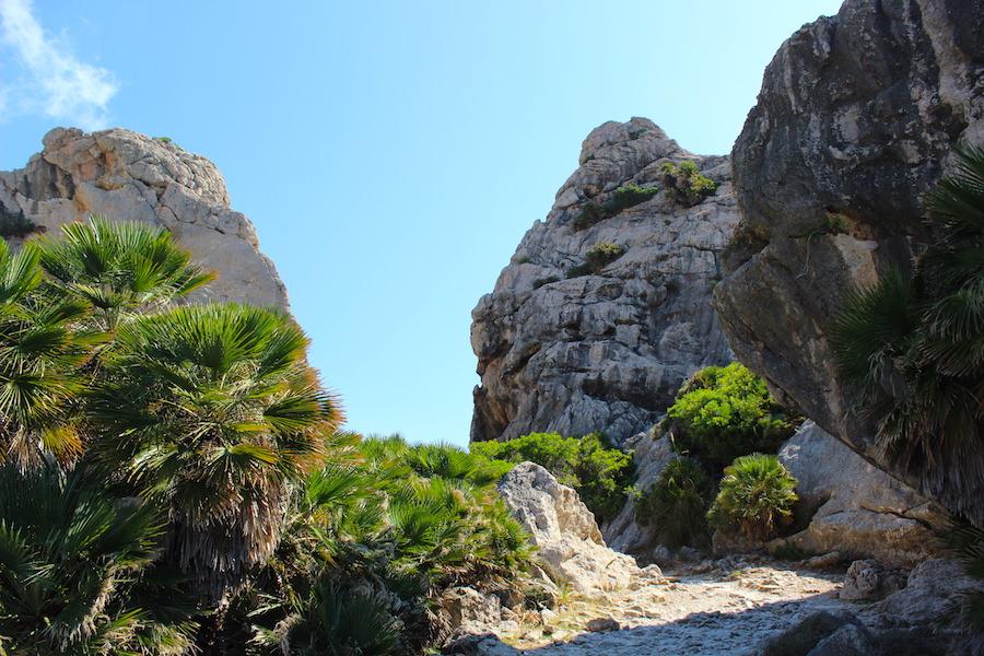 Wanderung Cala Bóquer Mallorca - Felsen