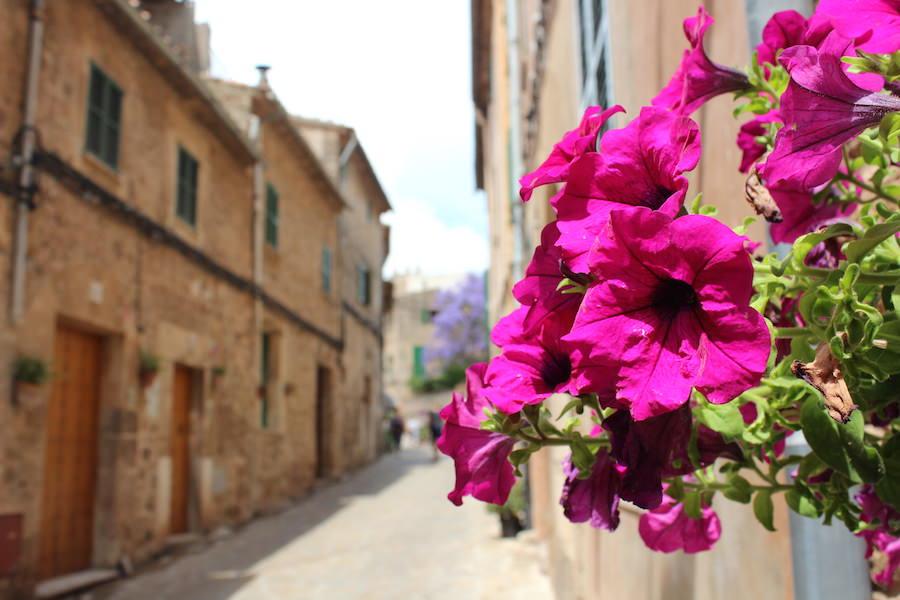 Mallorca Valldemossa - Blumen