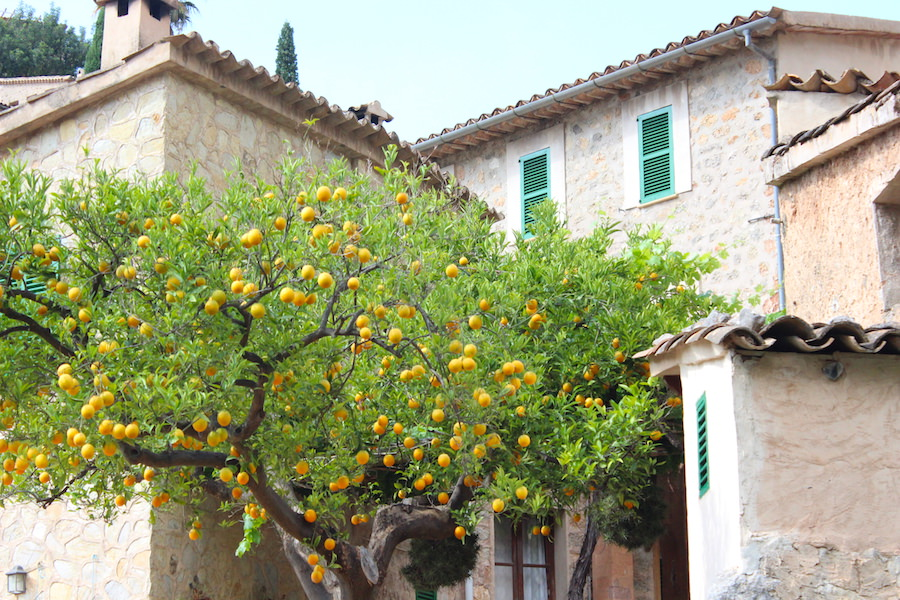 Mallorca Wanderung Cala Deià - Orangen vor dem Haus