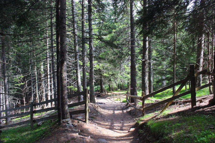 Vigiljoch Wandern Südtirol - Wald