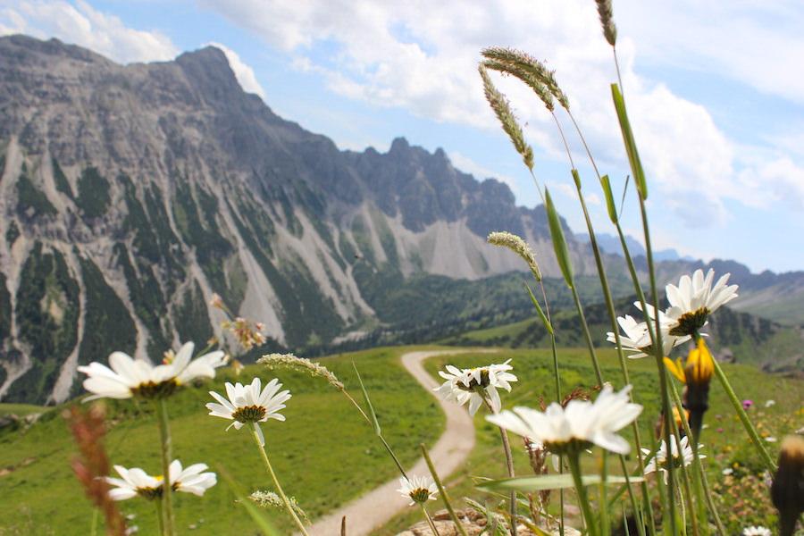 Vom Neunerköpfle zur Sulzspitze in Tirol - Bergpanorama