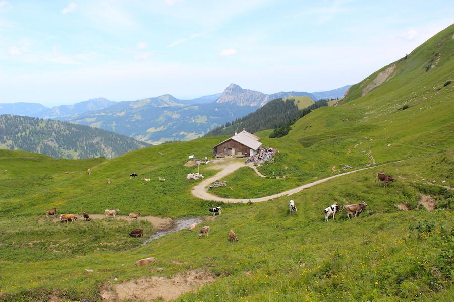 Vom Neunerköpfle zur Sulzspitze in Tirol - Gappenfeldalm weit
