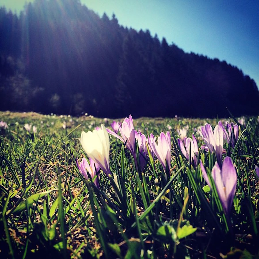 2. Wanderung am Alpsee April