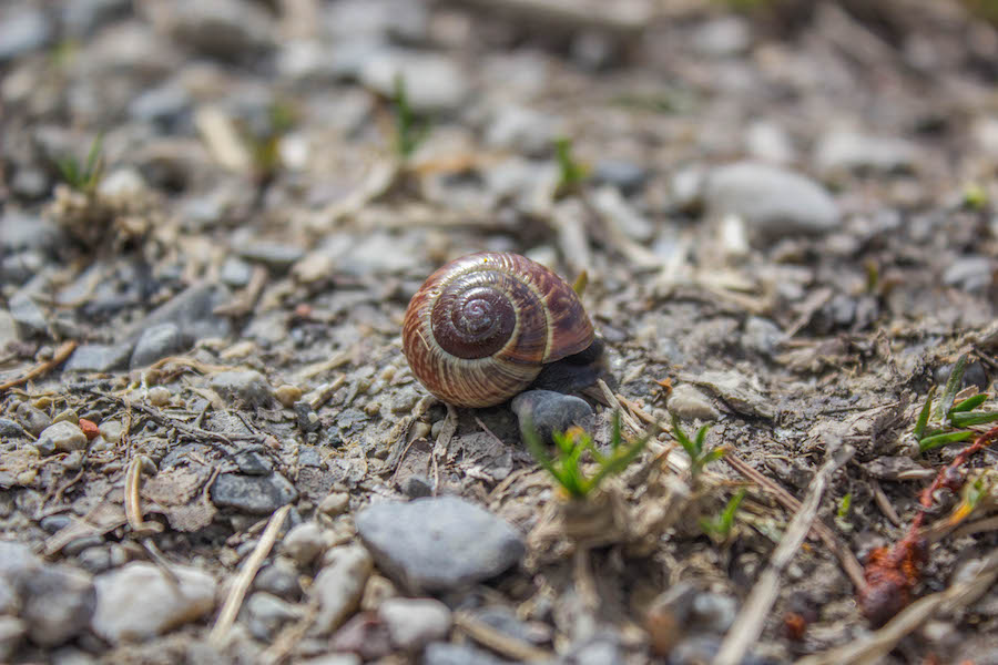 A Tasty Hike - Wandern am Gruentensee - Schnecke