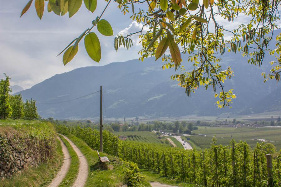 Naturnser Waalweg Suedtirol - Weinberg