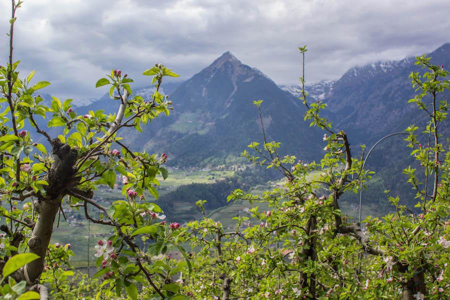 apfelplantage-schenner-waalweg