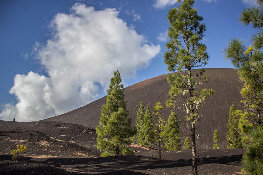 a-tasty-hike-wanderung-arenas-negras-teneriffa-vulkan-mit-baeumen