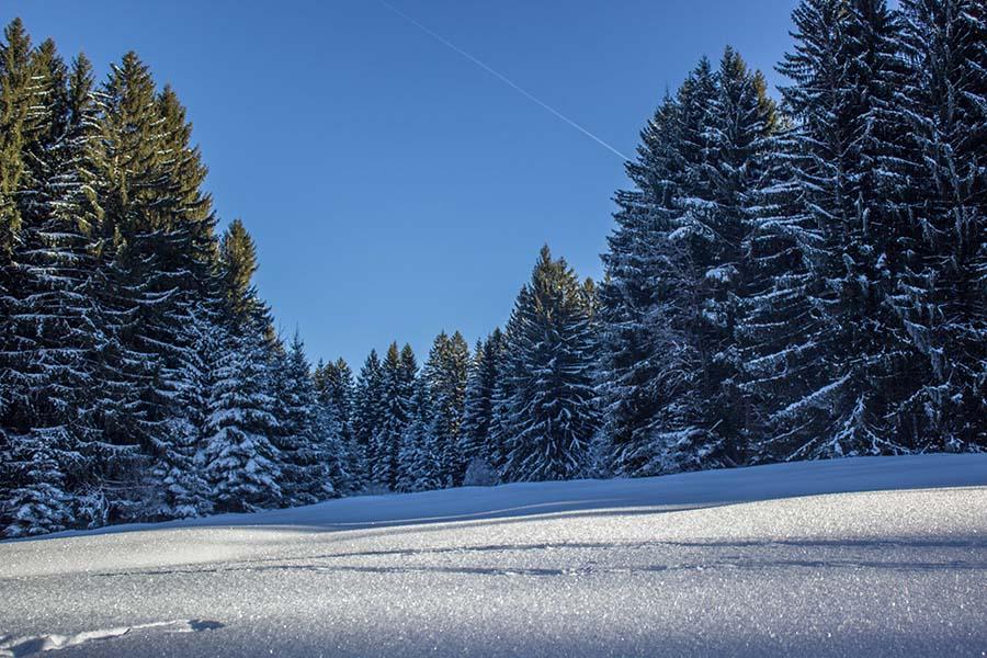 Premium Winterwanderweg Sinswang im Allgaeu - Wald und Tiefschnee