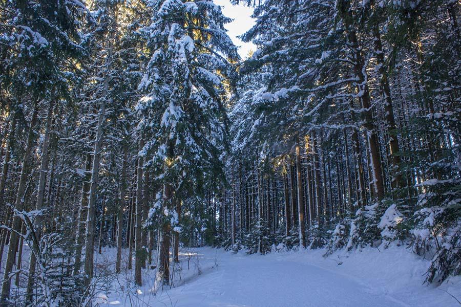 Premium Winterwanderweg Sinswang im Allgaeu - Wald
