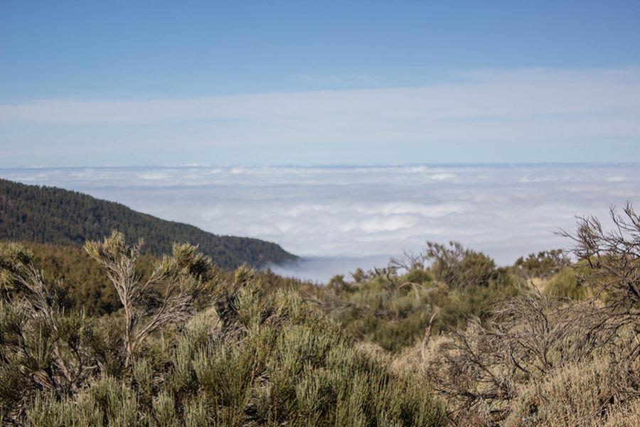 Wanderung Teneriffa - Hochebene - El Teide - Ueber den Wolken 2