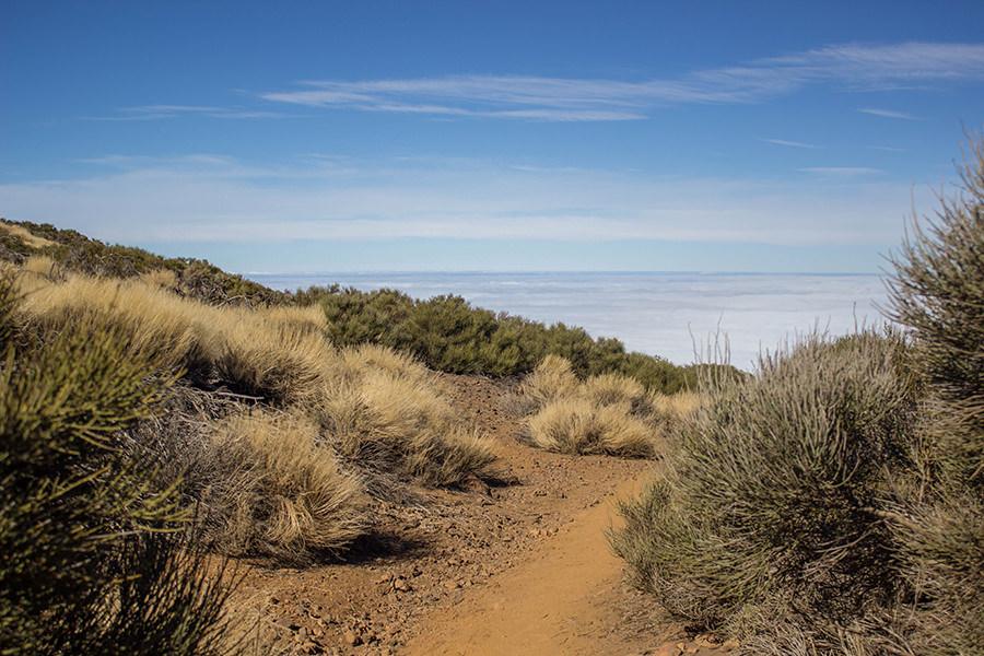 Wanderung Teneriffa - Hochebene - El Teide - brauner Sand