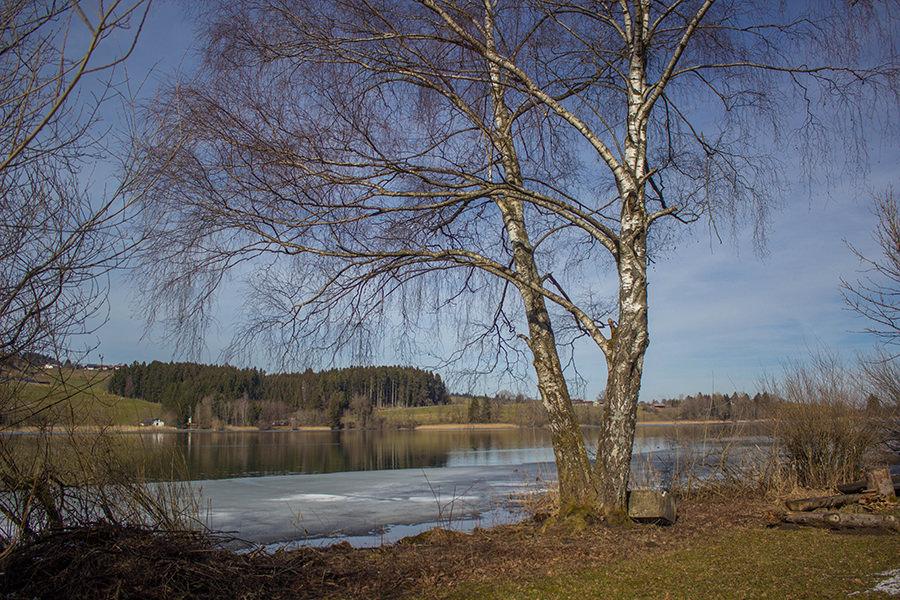 Wanderung Niedersonthofener See - Baum am See