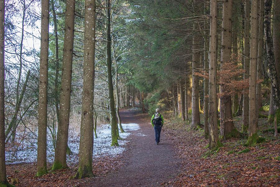 Wanderung Niedersonthofener See - Wanderweg Wald