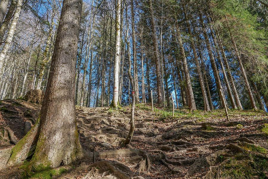 Wandern am Huendle - Wald