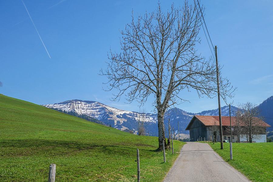 Wandern am Huendle - Weg mit Baum