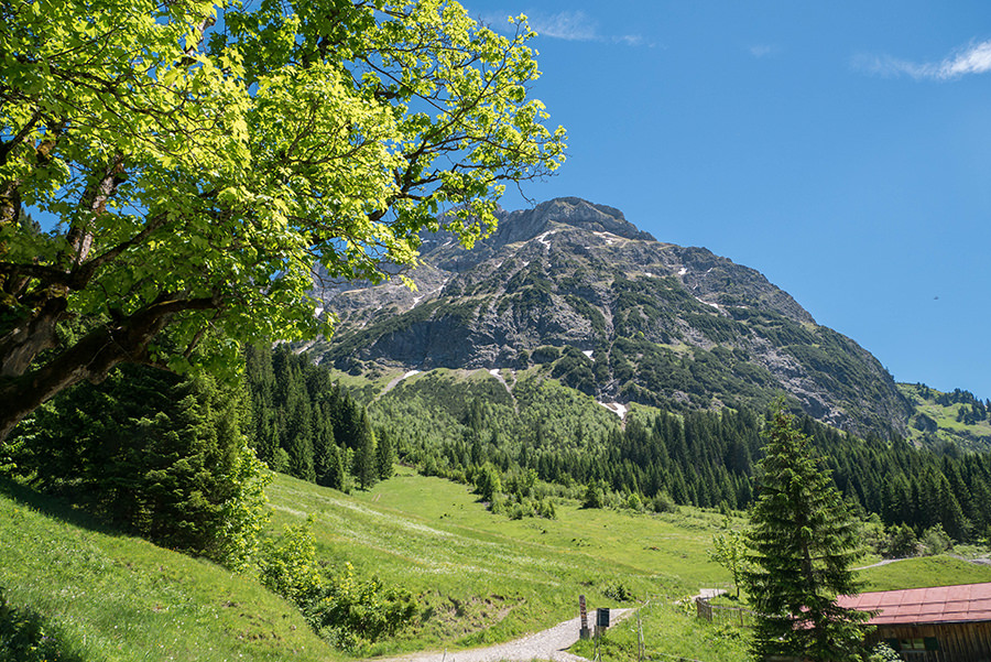 Wanderung im Baergunttal - Baum mit Bergen