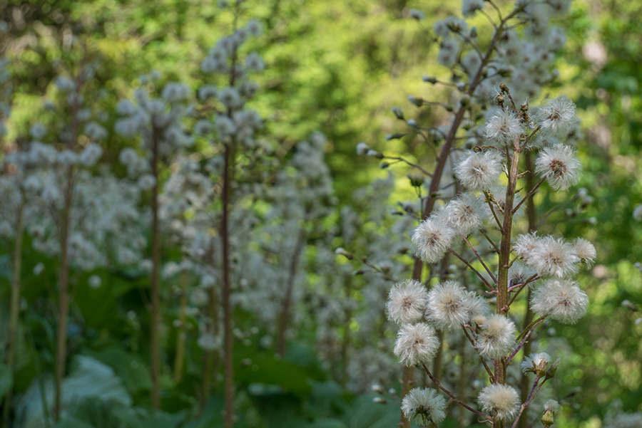Wanderung im Baergunttal - Pflanzen