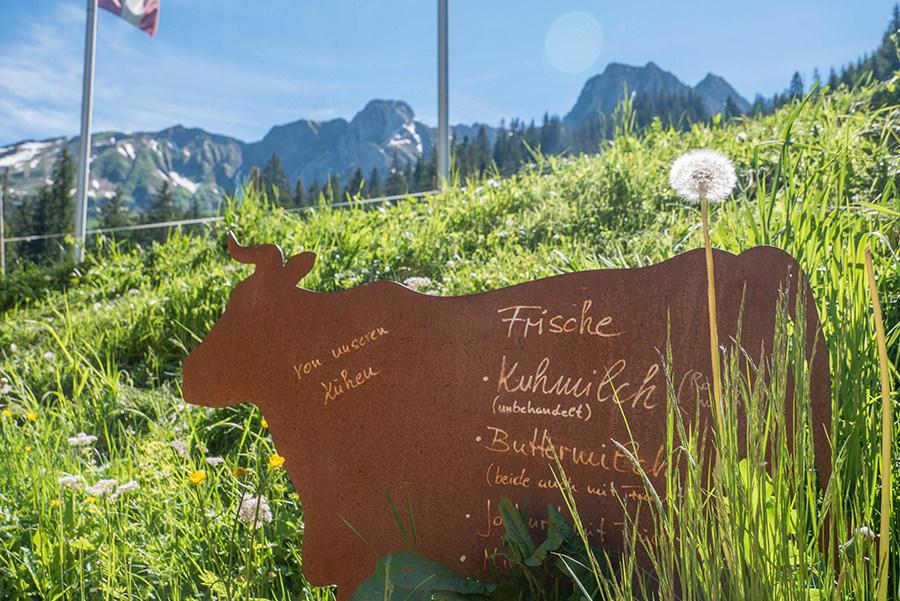 Wanderung im Baergunttal - frische Kuhmilch