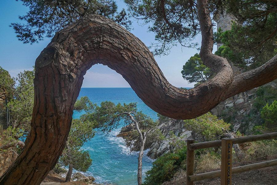 Wandern Costa Brava - GR 92 - Baum