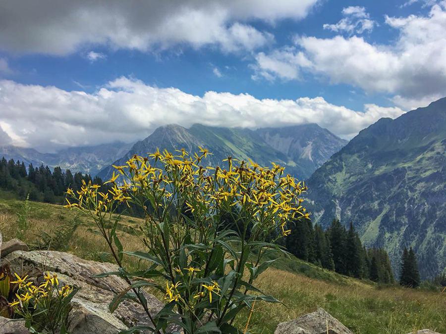 Wanderung zum Walmendinger Horn im Kleinwalsertal - Blumen