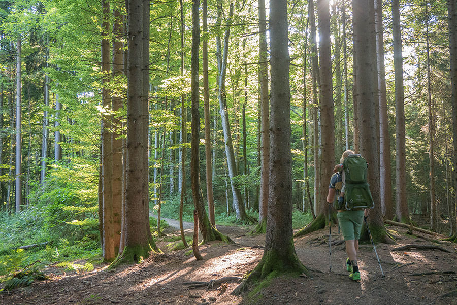 After Work Wandern am Alpsee im Allgaeu - Wald