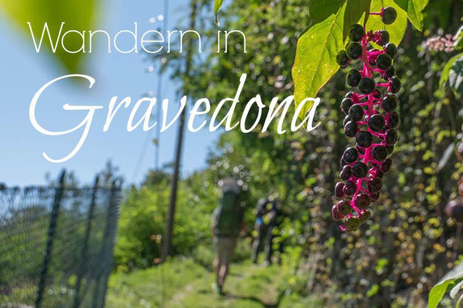 Wandern Gravedona - Weinreben - Titel