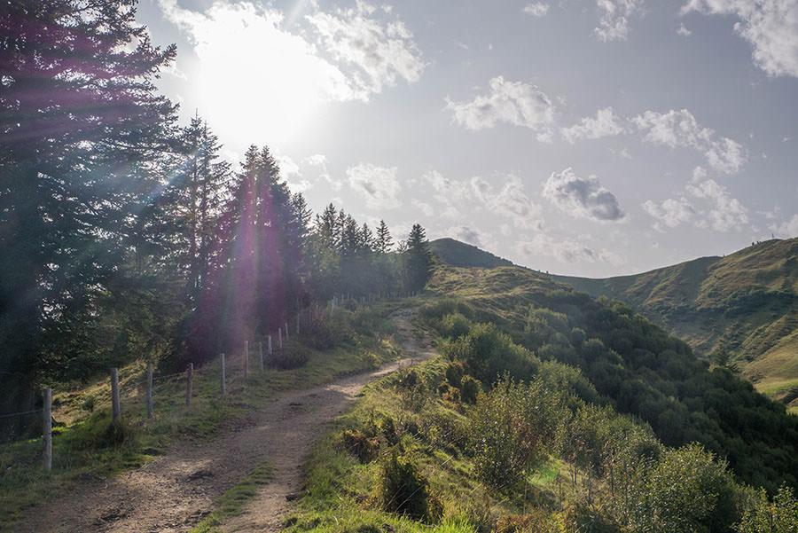 Wandern zum Riedberger Horn - Letzter Blick nach oben