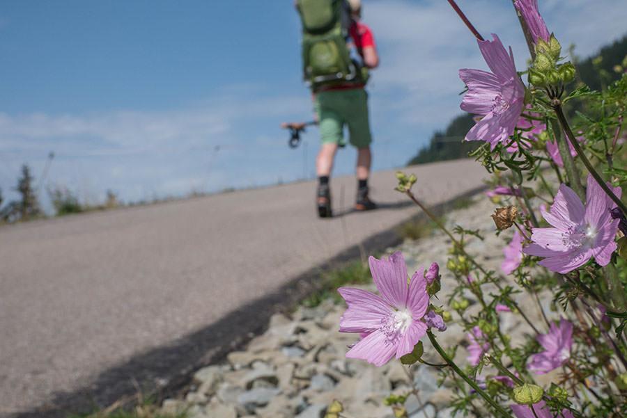 Wandern zum Riedberger Horn - Wanderweg mit Blume