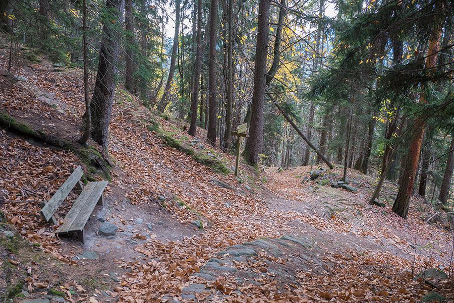 Wandern Taser in Suedtirol - Bank im Wald