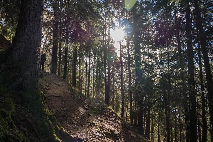 Wandern Taser in Suedtirol - Wald mit Sonne