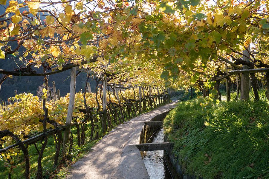 A Tasty Hike - Wandern Algunder Waalweg - Weinanbau