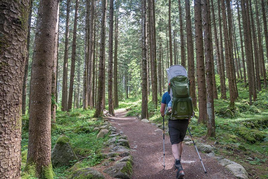 A Tasty Hike Wanderung Reinbach Wasserfaelle bei Sand in Taufers in Suedtirol - Waldbaden