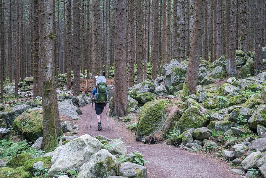 A Tasty Hike Wanderung Reinbach Wasserfaelle bei Sand in Taufers in Suedtirol - Wandern durch den Wald