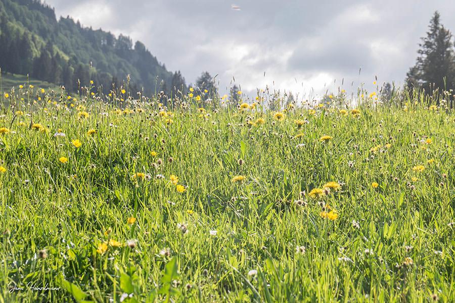 A Tasty Hike - Wanderung Buchenegger Wasserfaelle - Blumenwiese
