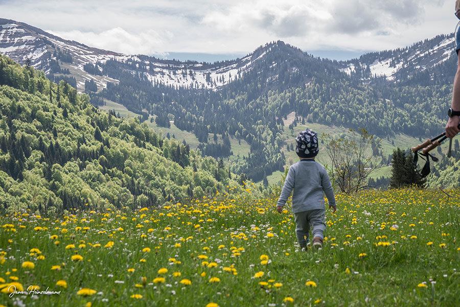 A Tasty Hike - Wanderung Buchenegger Wasserfaelle - Wiese mit Zwergsteiger