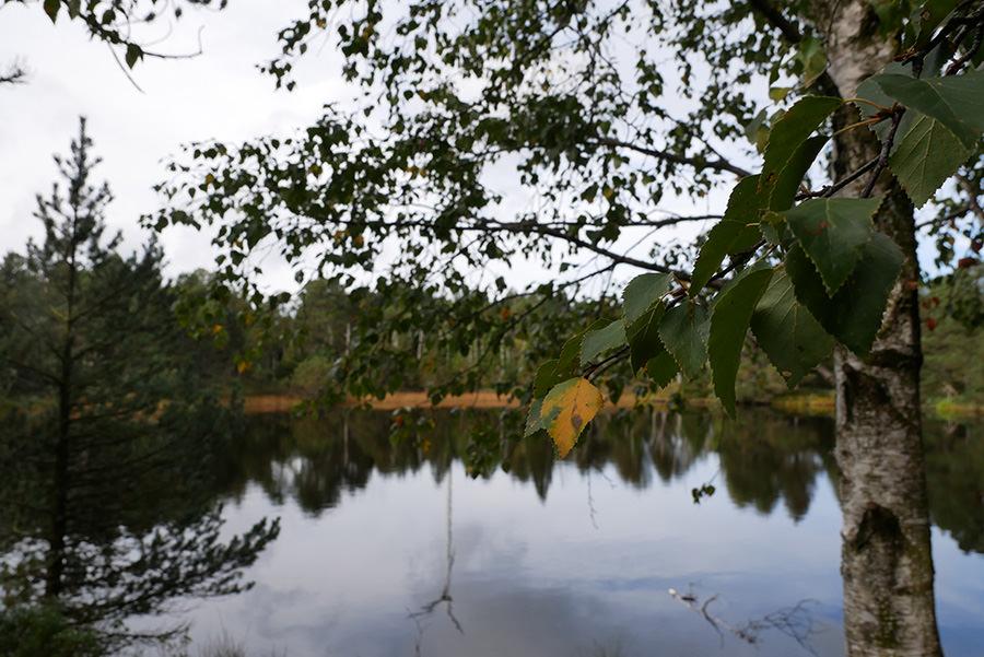 Wandern Schwarzwald - A Tasty Hike - Blindensee Ueberblick